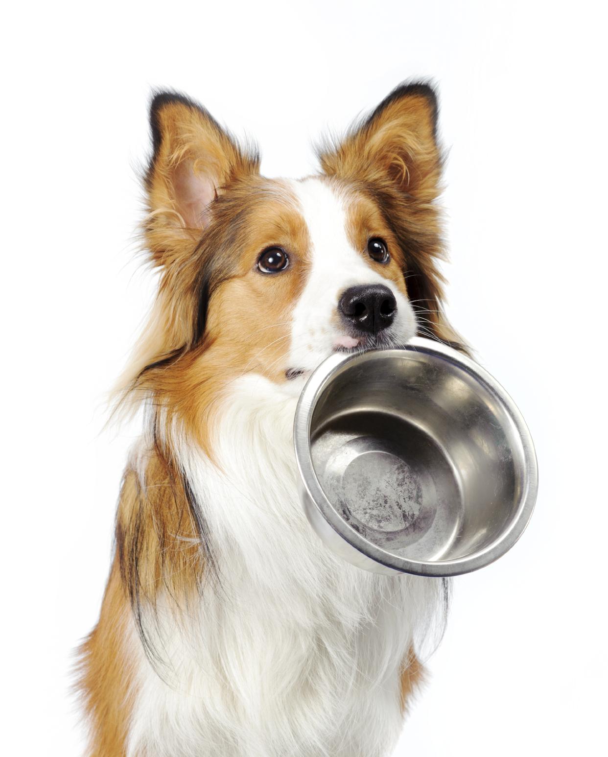 אוכל לכלב: מידע חשוב